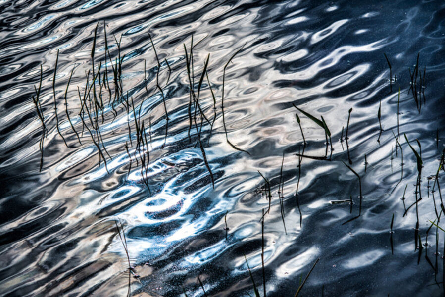 John Mazlish, 'Silver Shimmer'
