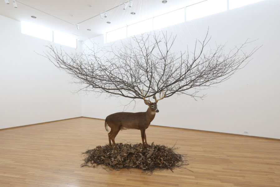 Myeongbeom Kim, 'Deer', 2008