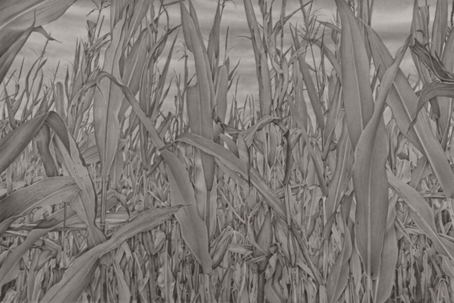 Mary Reilly, 'Corn Field 1', 2019