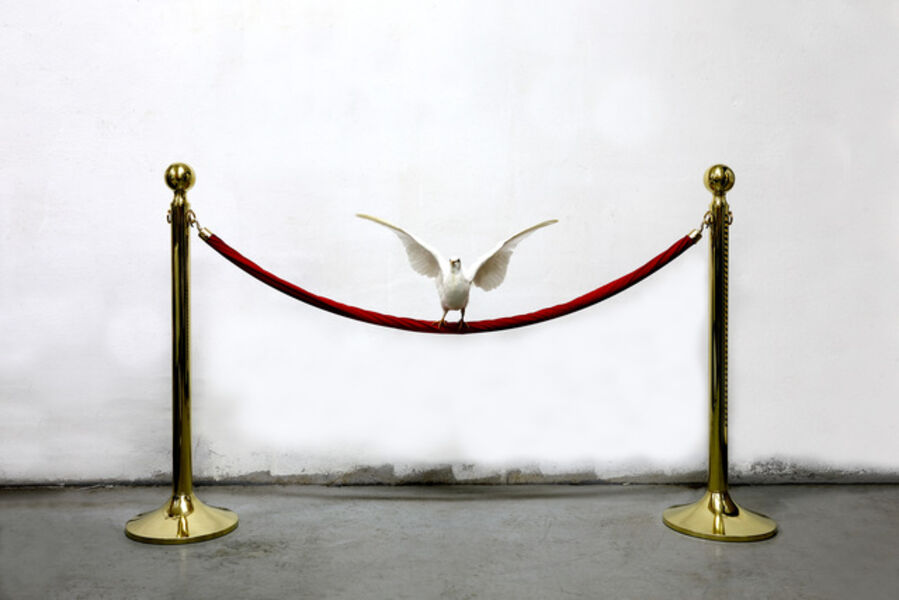 Myeongbeom Kim, 'Untitled (Dove)', 2017