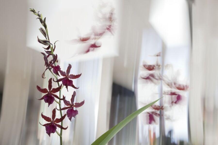 Olivia Parker, 'Red Orchids', 2011