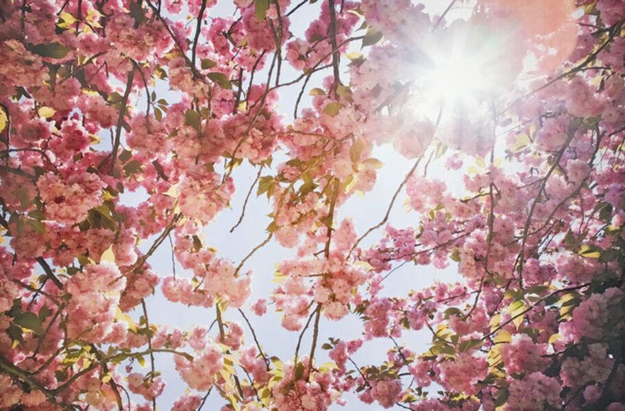 Susan Wides, 'Cherry Blossom1', 2002