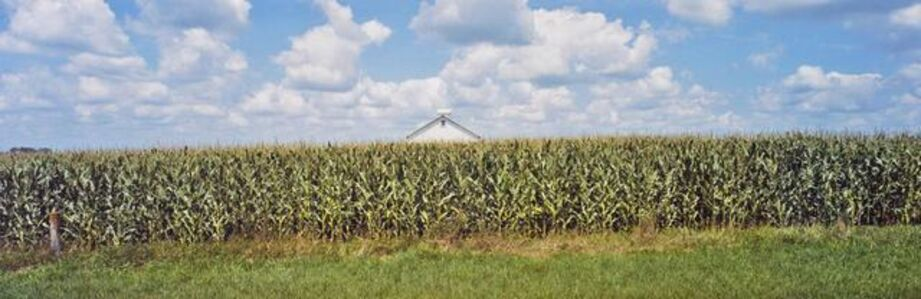 Stuart Klipper, 'Cornfield, Country Road 108, Otter Tail County, Minnesota', 2010