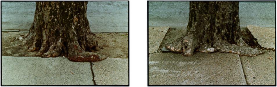 Zoe Leonard, 'Untitled', 2002