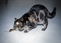 Bene Ochs, My cat, bringing his new friend to the studio. Courtesy of Tarzipan Books.
