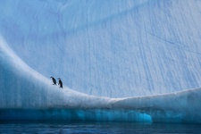 Paul Nicklen, Home Ice Advantage. Courtesy of Paul Nicklen Gallery.