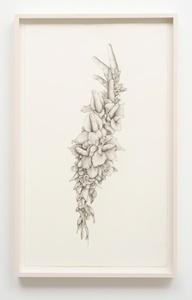 Untitled (Gladiolas)