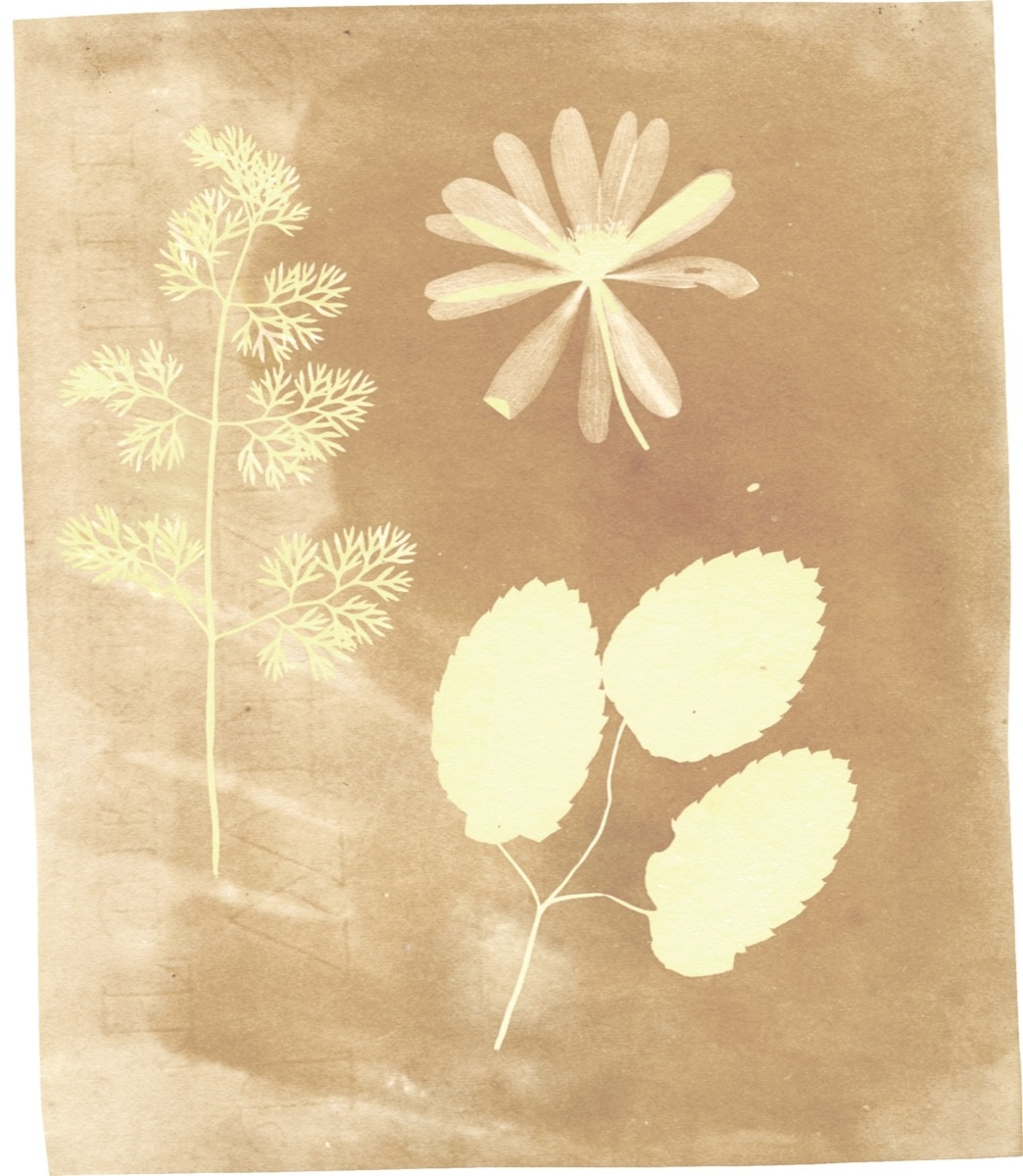 Original print by William Henry Fox Talbot. Courtesy of National Media Museum.