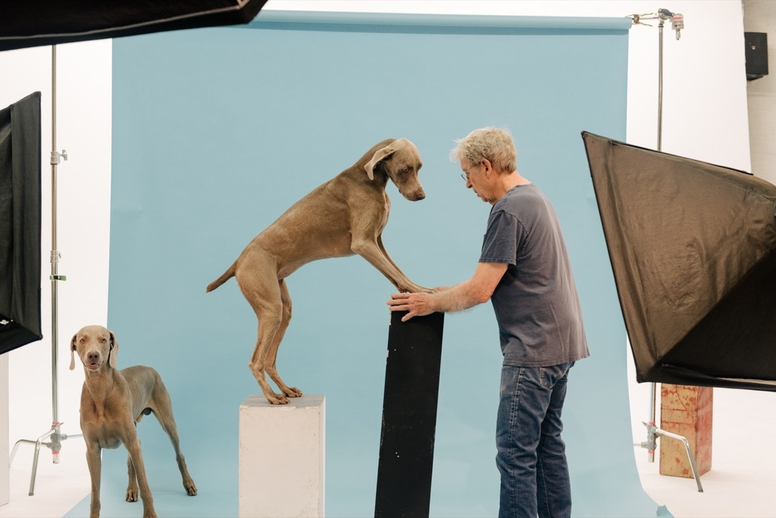 Portrait of William Wegman with dogs Flo and Topper in his New York studio by Daniel Dorsa for Artsy.