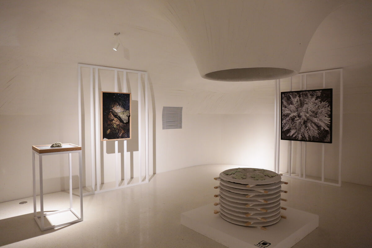 """""""After Nature"""" Exhibition, Courtesy of Ullens Center for Contemporary Art, UCCA."""