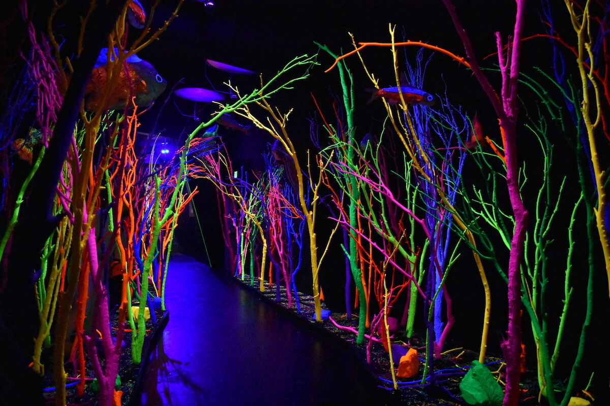 An installation at Meow Wolf in Santa Fe, New Mexico. Photo by duluoz cats, via Flickr.