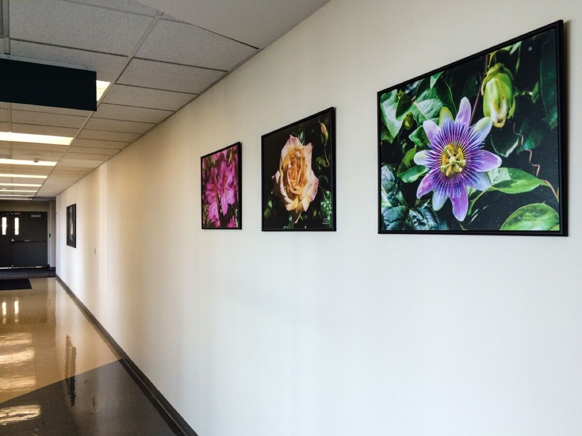 Photos by Elaine Poggi at the Hannibal Regional Hospital in Missouri. Courtesy of the Foundation for Photo/Art in Hospitals.