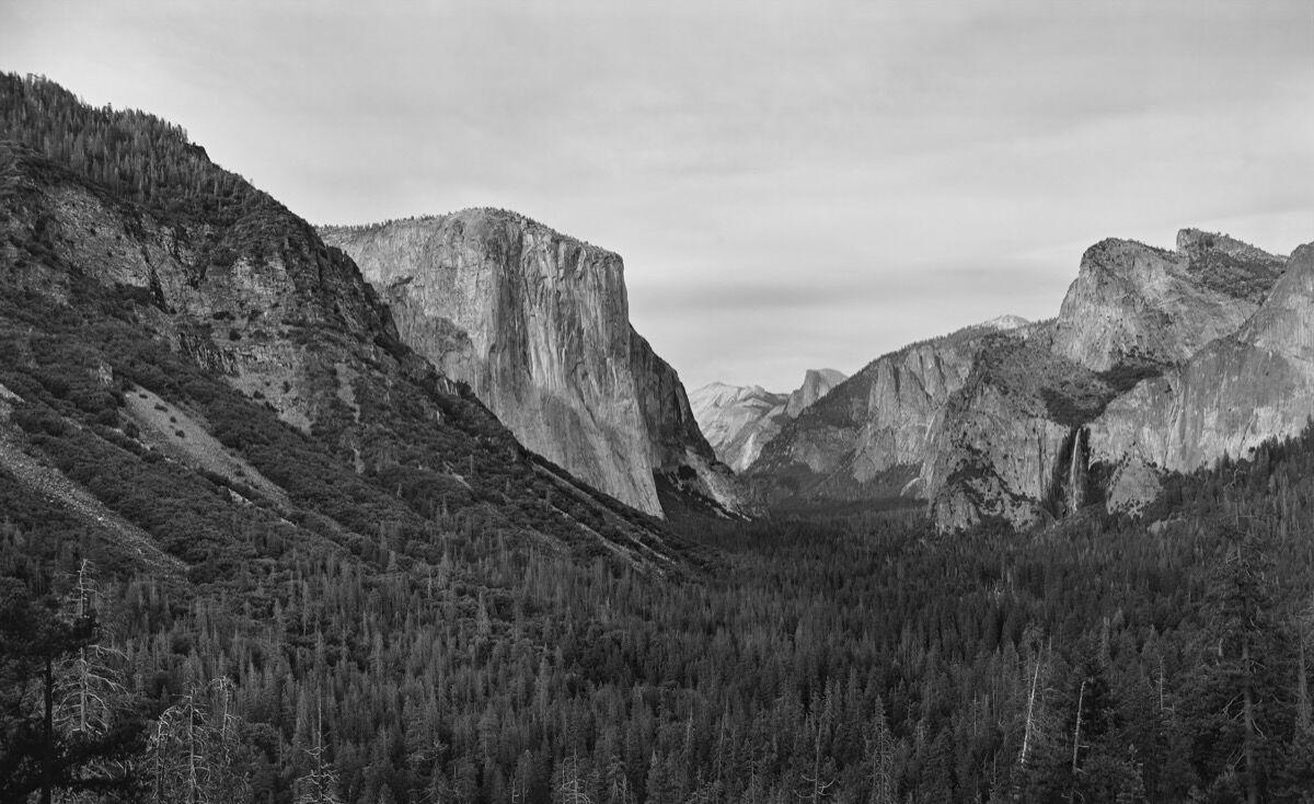 Richard Learoyd,  Yosemite 4 (BPV) , 2018. © Richard Learoyd. Courtesy of Fraenkel Gallery, San Francisco.