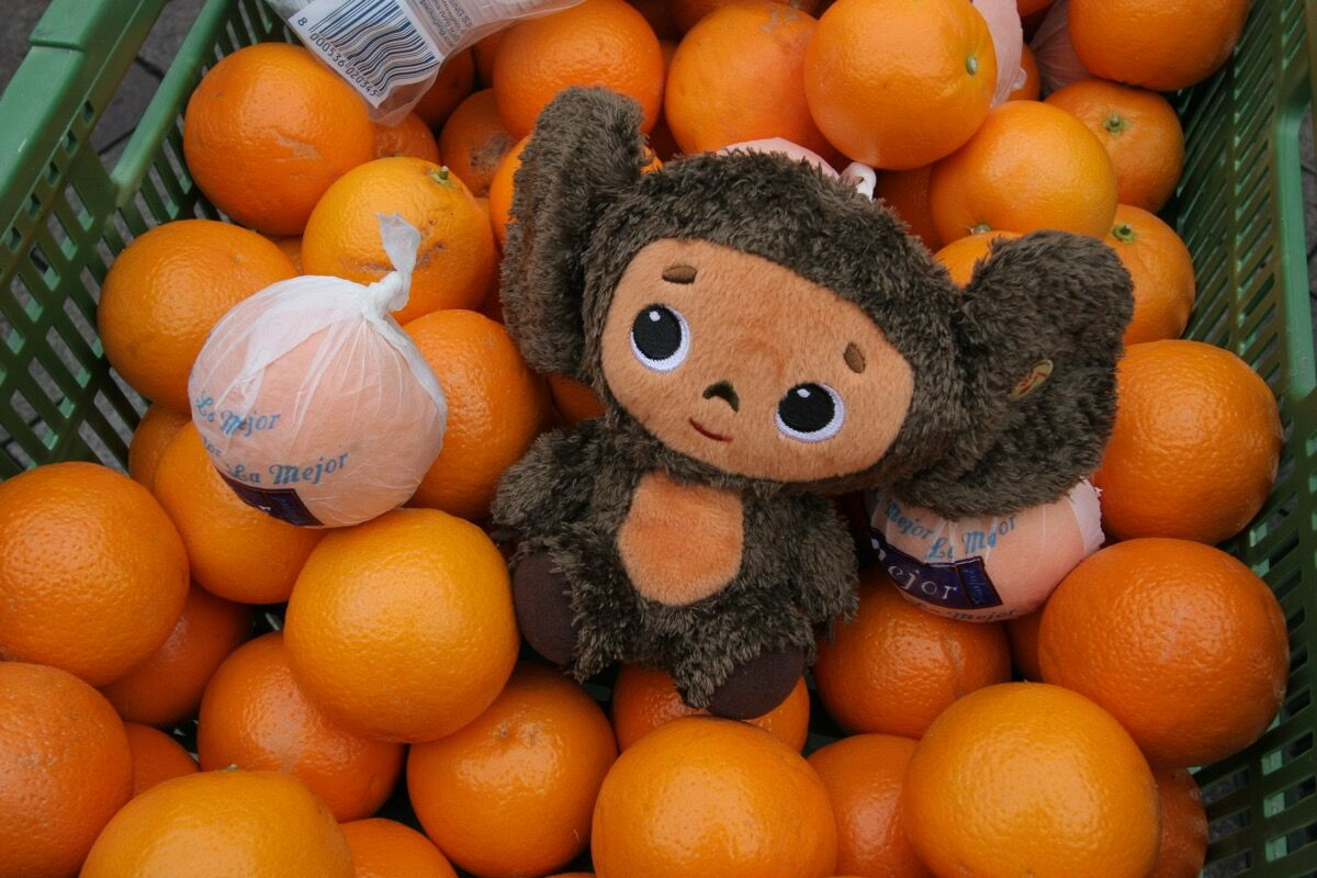 A Cheburashka plushie in a crate of oranges, 2009. Photo by Steven River, via Flickr.