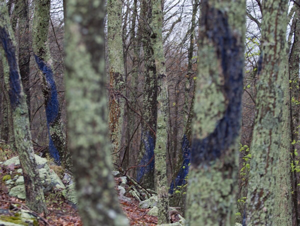 Aviva Rahmani, Blued Trees Symphony, Brush Mountain, Virginia. Photo by Sarah Miller, 2016. Courtesy of A Blade of Grass.