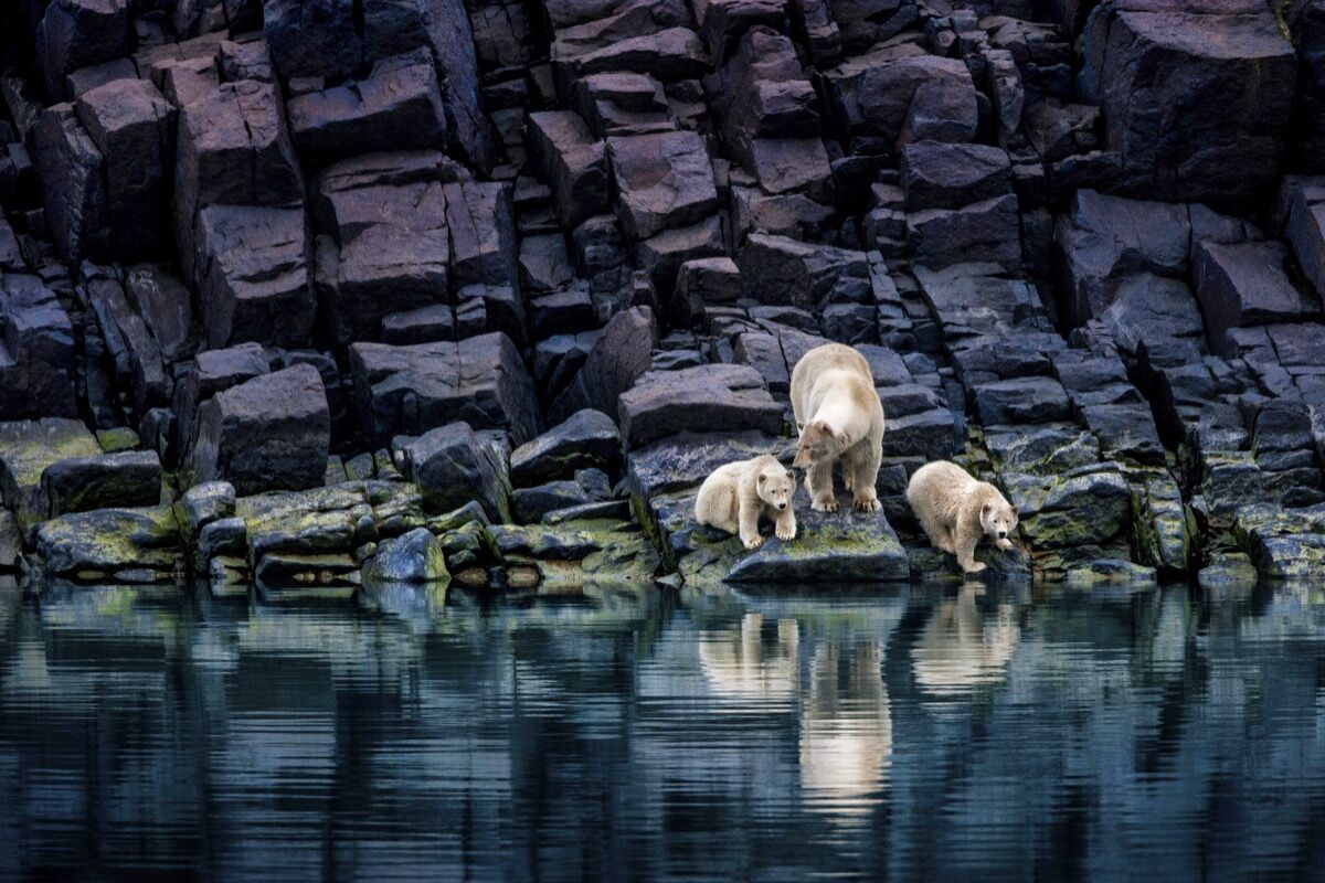 Paul Nicklen, The Long Summer. Courtesy of Paul Nicklen Gallery.