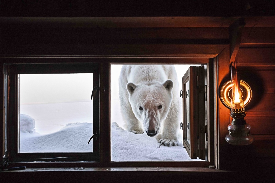 Paul Nicklen, Face to Face. Courtesy of Paul Nicklen Gallery.