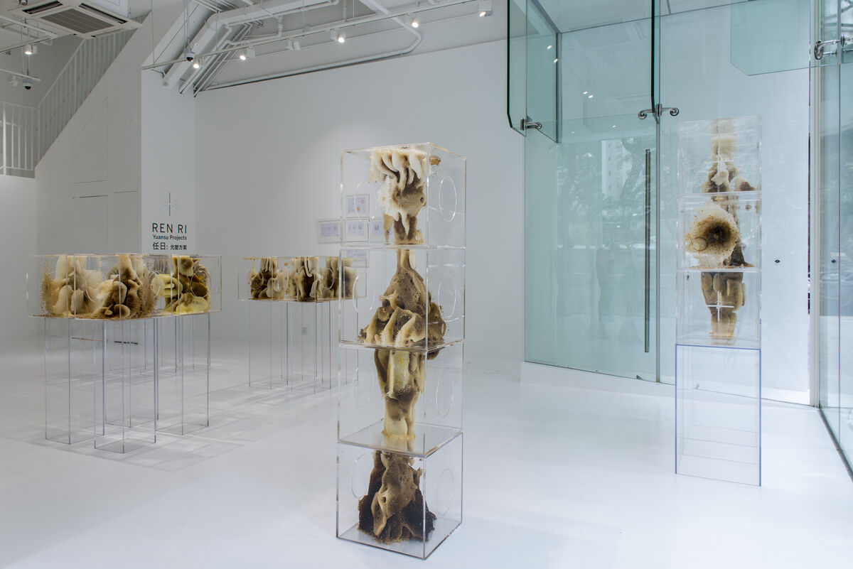 "Installation shot of ""Ren Ri: Yuansu Projects"" at Pearl Lam Galleries SOHO. Courtesy Pearl Lam Galleries and the artist."