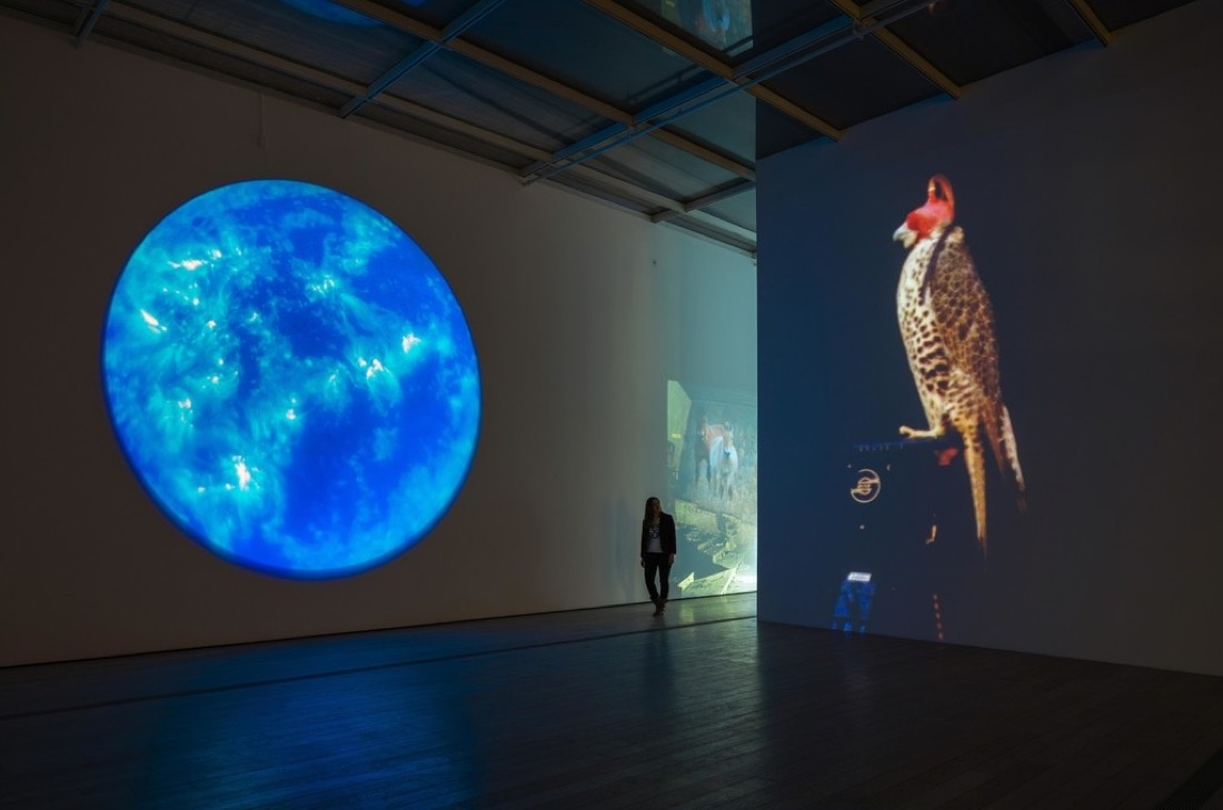 """Installation view of """"Diana Thater: The Sympathetic Imagination"""" at LACMA. Photo by Fredrik Nilsen, courtesy of Diana Thater."""