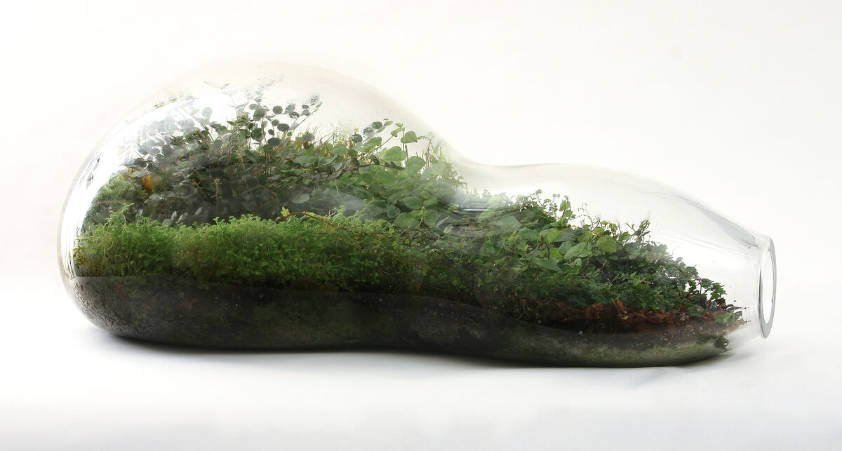 Paula Hayes, Teardrop Terrarium T013, 2004. Photo by Sherry Griffin. Courtesy of the artist.