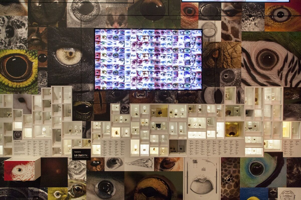 Wall of Eyes © Trustees of NHM, London. Photo courtesy of NHM London.