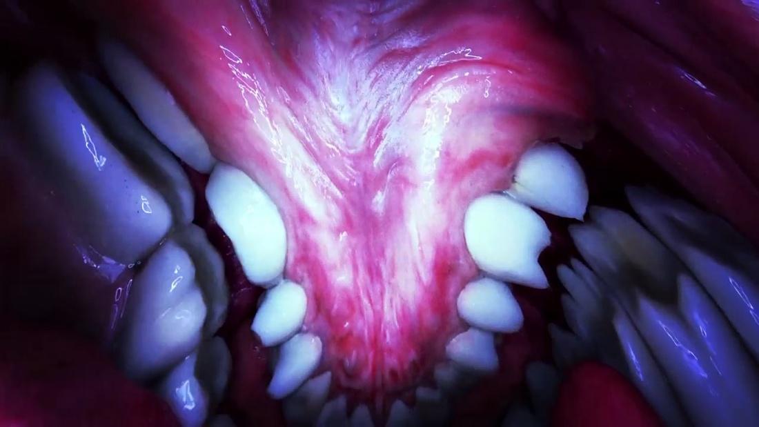 Björk, Mouthmantra VR. Directed by Jesse Kanda.