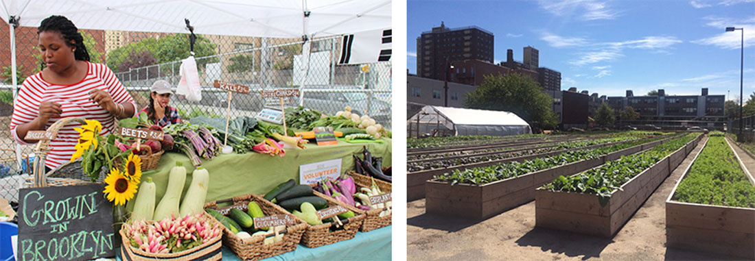 Marcus Garvey Apartments (MGA) Brownsville Farmstand (Left) and Farm (Right). Courtesy of Project EATS.