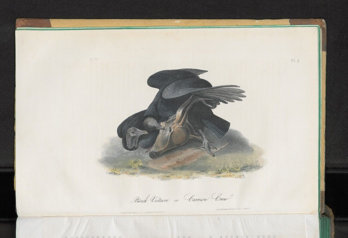 John James Audubon, The Birds of America from drawings made in the United States, printed in New York between 1840 and 1844 in 7 volumes. Courtesy Sotheby's.