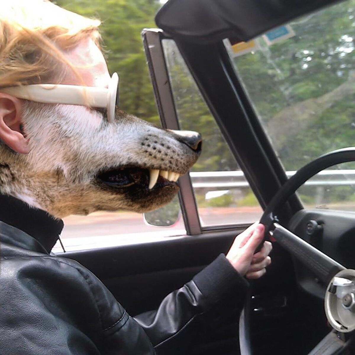 Julia Oldham, Werewolf Driving her 1969 Datsun Roadster, 2017. Courtesy of the artist.