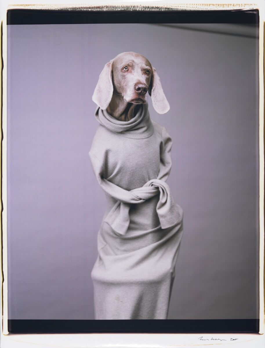 William Wegman, Twisted Hope, 2001. Courtesy the Artist and Sperone Westwater, New York.