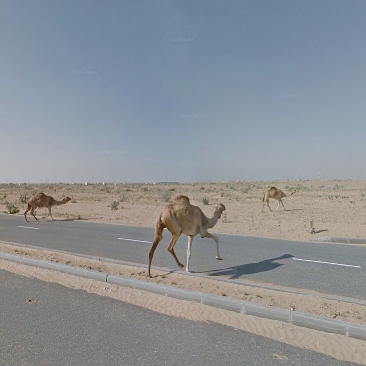 Sharjah, United Arab Emirates. Photograph by Jacqui Kenny via Google Street View.