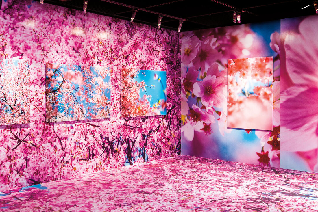 Mika Ninagawa Museum of Contemporary Art Taipei, 2016