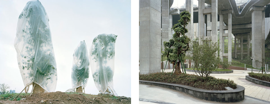Left: Yan Wang Preston, Forest #6, 2011. Right: Yan Wang Preston, Forest #6, 2014. © Yan Wang Preston