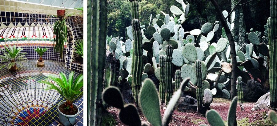 Views of the Chapultepec botanical gardens by Pia Riverola.