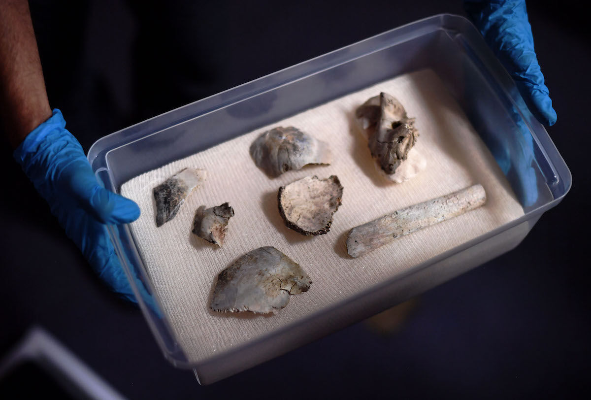 Fragments of the oldest human fossil found within today's Brazilian borders, known as 'Luzia,' which were found among the rubble of Rio de Janeiro's National Museum. Photo by Carl de Souza/AFP/Getty Images.