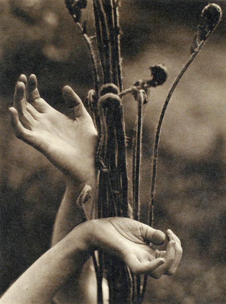 Dana Steichen's Hands