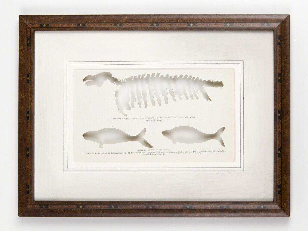 RIP Steller's Sea Cow: After Wilhelm Meyer, 1881