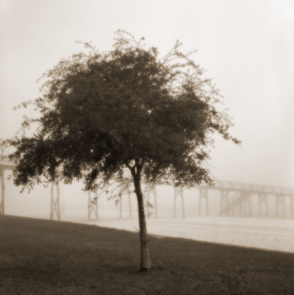 Tree with Pier