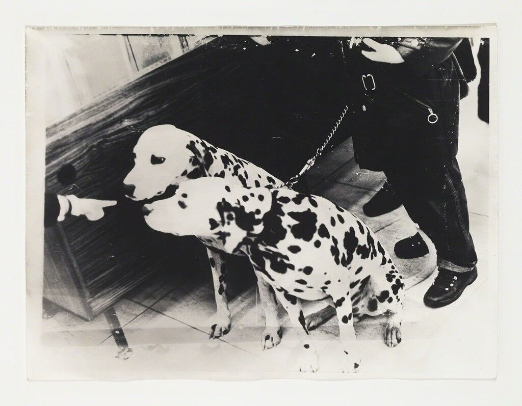 Untitled, Dalmatian Dogs
