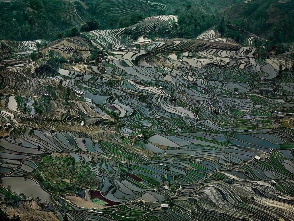 Rice Terraces #5,Western Yunnan Province, China