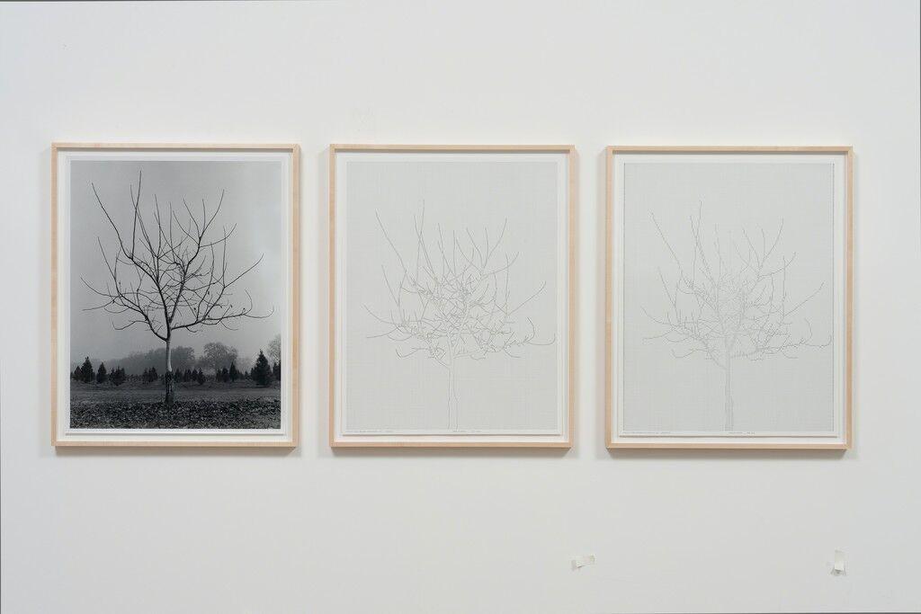 Walnut Tree Orchard, Set 4 (version 2)