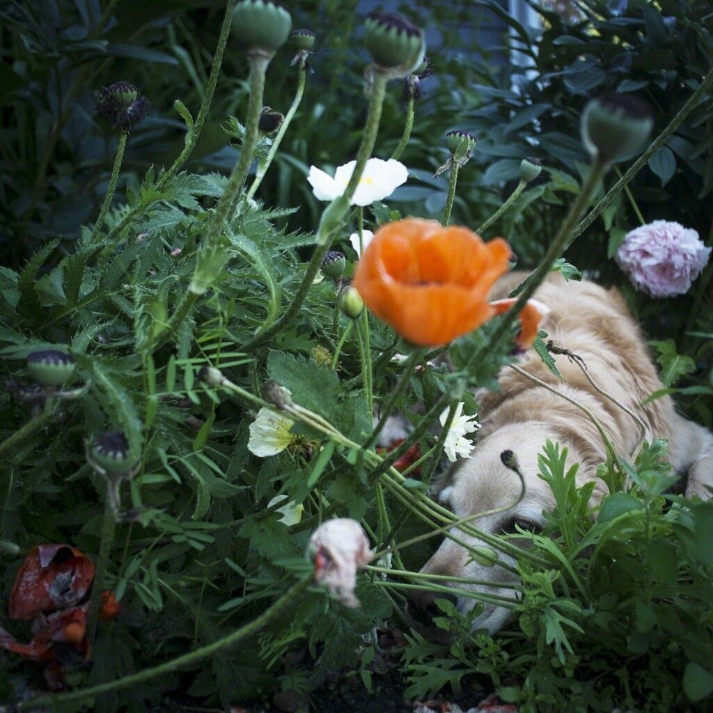 Scarlet and the Poppies