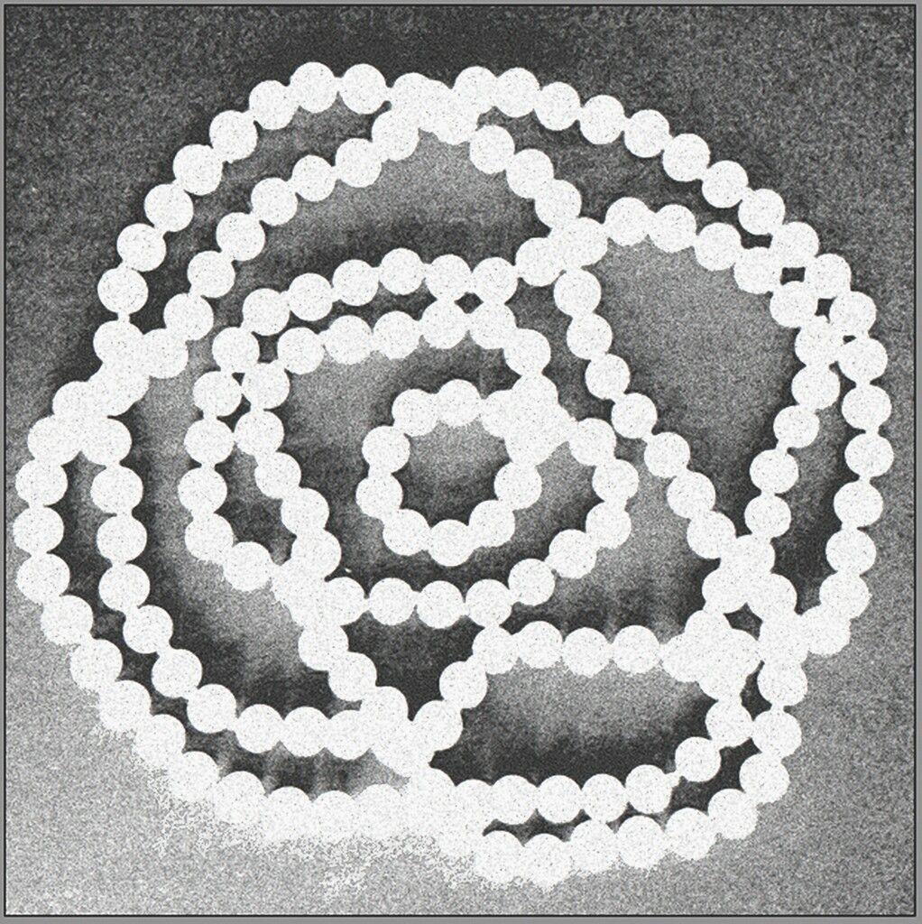 Camellia Pearls