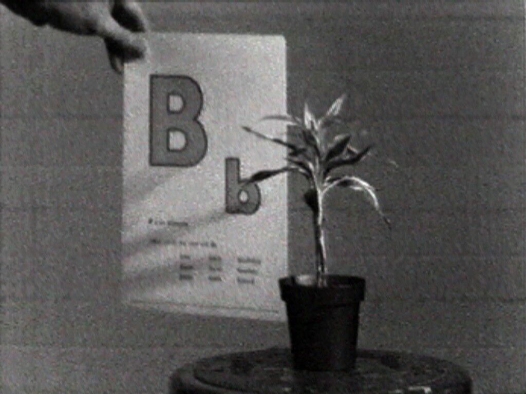 Teaching a Plant the Alphabet