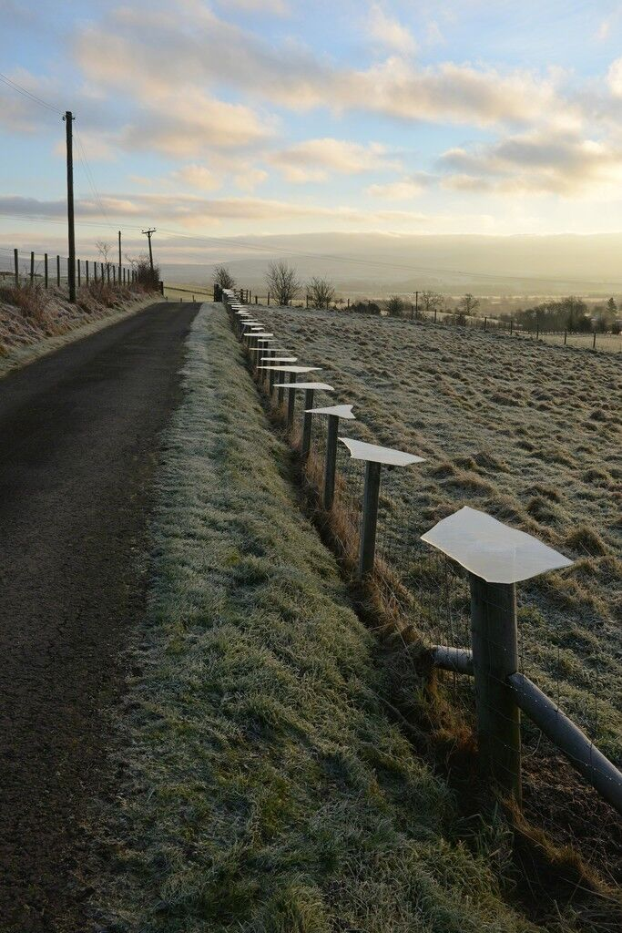 Ice. Lifted from nearby pond. Place on top of fence posts. Early morning. Dumfriesshire, Scotland. 30 January 2017