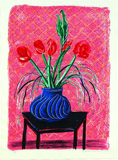 Amaryllis in Vase