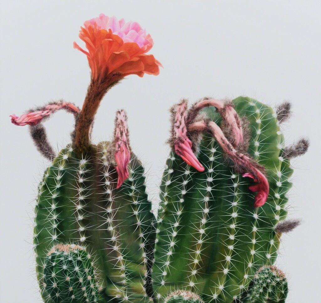 Cactus No.98