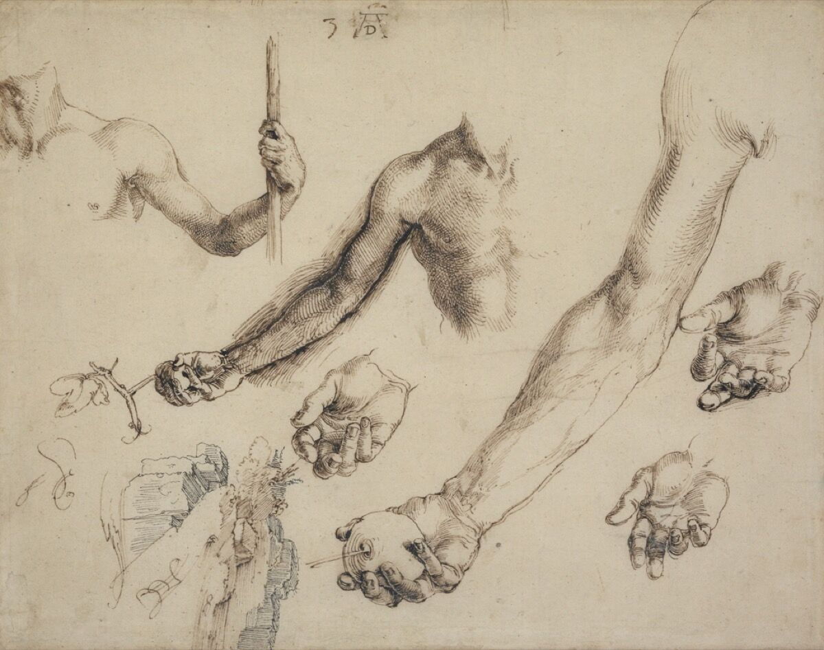 Albrecht Dürer, Studies for Adam and Eve, 1504. © The Trustees of the British Museum (2017). All rights reserved.
