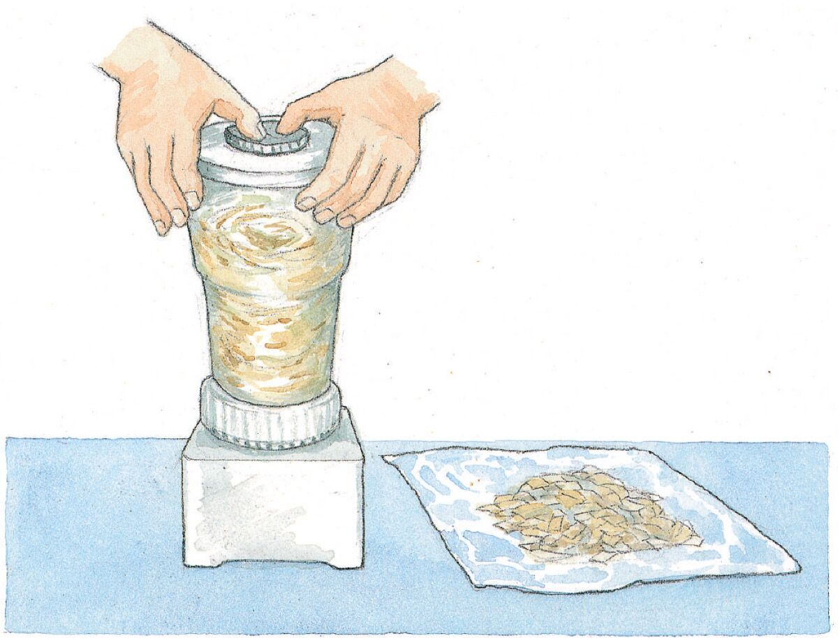 Making pulp with a blender.  Illustration by Alison Kolesar from Papermaking with Garden Plants and Common Weeds by Helen Hiebert.