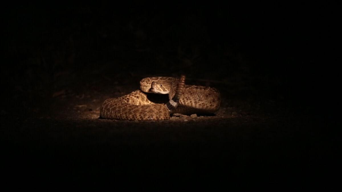 Mara de Luca, Talisman: Snake, 2018. Courtesy of Totah Gallery.